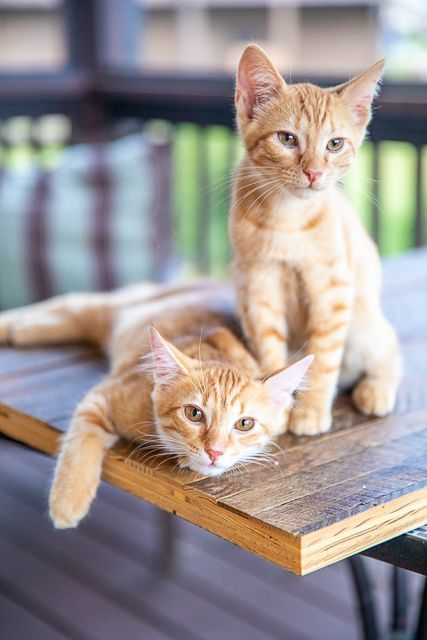 Debating Keeping Your Cat Indoors Or Letting Them Outside In 2020 Baby Cats Cats Kittens Cutest