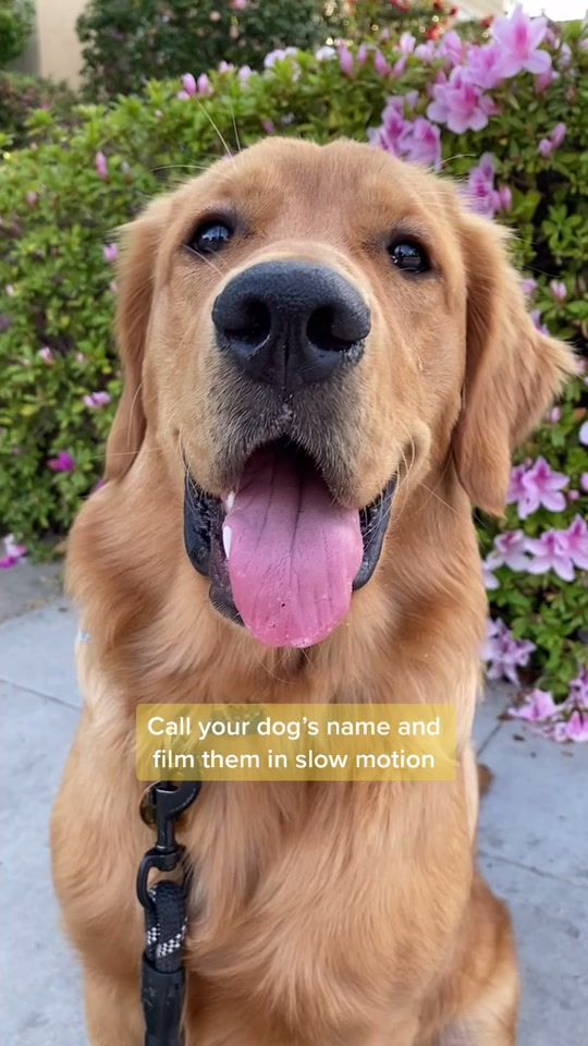 Watch Trending Videos For You Tiktok In 2021 Dog Names Crazy Funny Memes Cute Animals