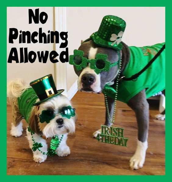 SAINT PATRICK RHINESTONE TEES FOR DOGS AND PEOPLE