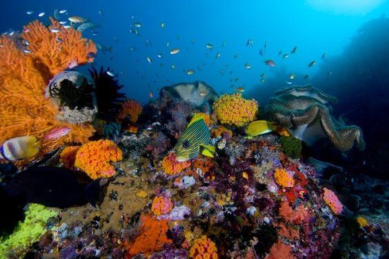Mar Mágico: a beleza do mar na paleta da Dailus! | Blog da Ana