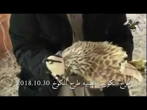 Youtube Animals Youtube Art