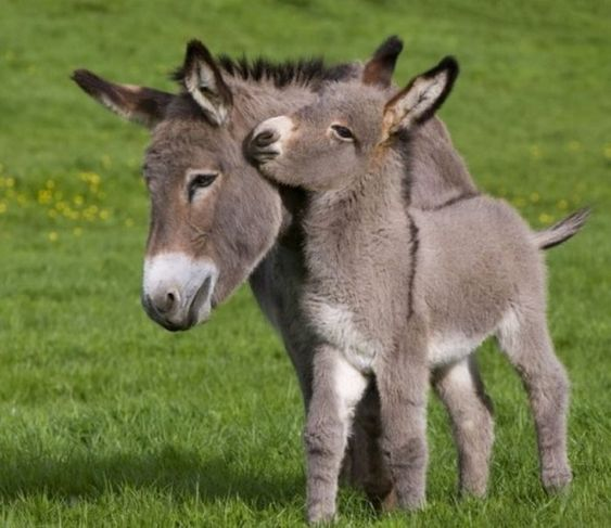 Cute and Funny Donkeys#donkey #fun #funny #quotes #animals #soumo_eu