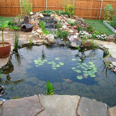 Koi pond water garden installed with plant shelves for for Koi fish pond plants