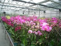Resultado de imagem para greenhouse orchids