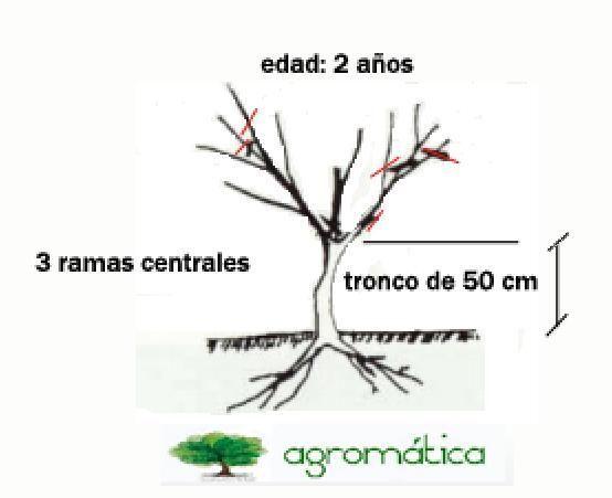 Poda Del Naranjo Jardineria Y Plantas Estantes De Plantas Horticultura