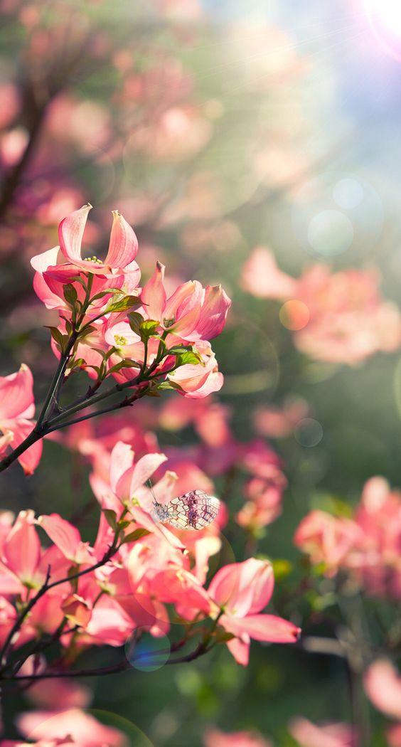 Butterfly, spring wall iPhone wallpaper ️ Pinterest