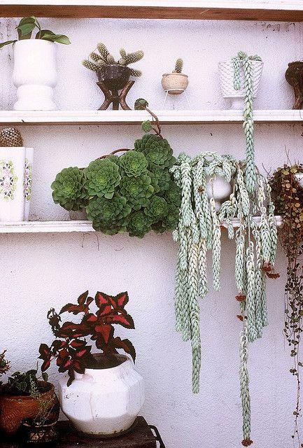 Patio Plants by The Real Estreya