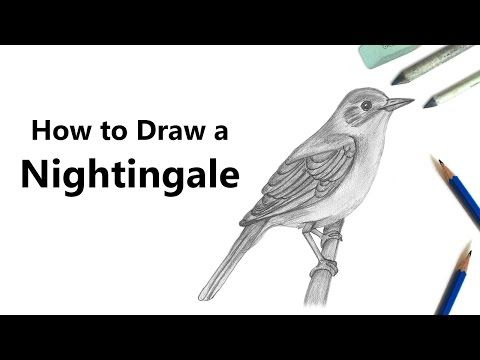 Sketch Nightingale With Pencils With Pencil Through Our Step By