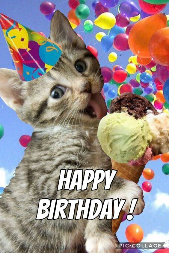 Funny Cat Memes Pictures Happy Birthday Funny Cats Cat Birthday Wishes Happy Birthday Cat