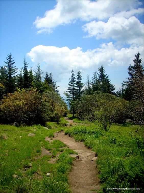 Part of the trail to andrews bald a grassy meadow for Www cabins of the smoky mountains com
