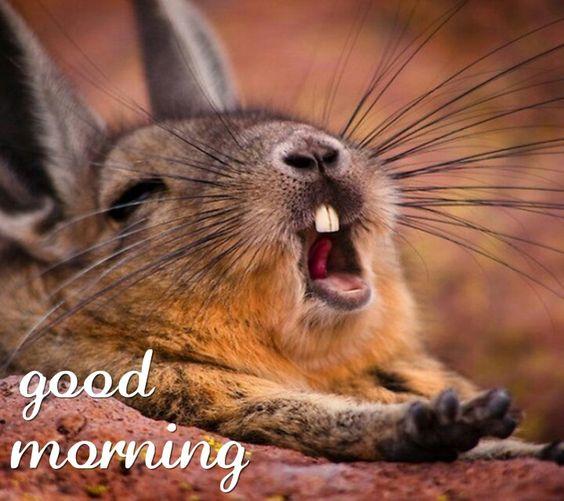 Good morning bunny rabbit