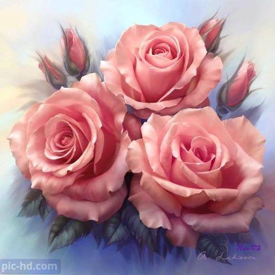 صور ورود أجمل صور خلفيات ورد للهاتف أجمل الورود الطبيعية Flower Painting Flower Art Rose Painting