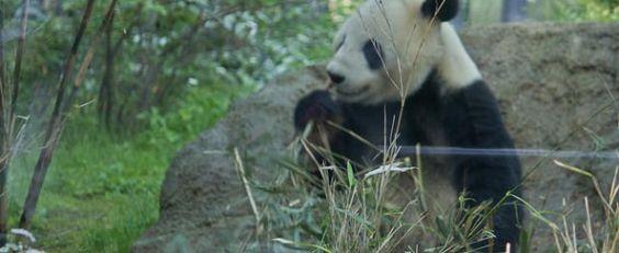 Zoo de Ueno, entre pandas et autres animaux