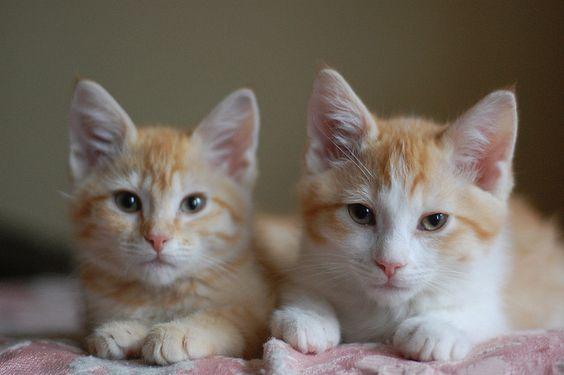 Tiny Cats!