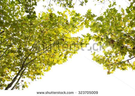 Park of Pateira de Fermentelos - stock photo