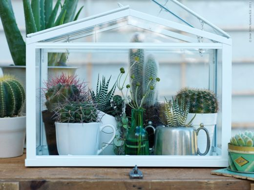 mini greenhouse things i want pinterest jardins serres et plantes grasses. Black Bedroom Furniture Sets. Home Design Ideas