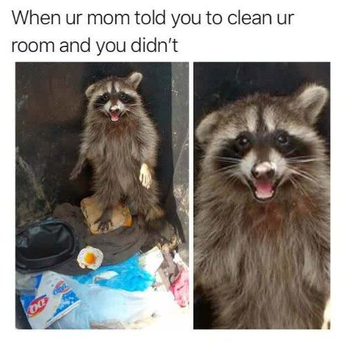 Memes I Send To My Boyfriend 50 Pictures Ladnow Funny Animal Memes Mom Jokes Funny Memes