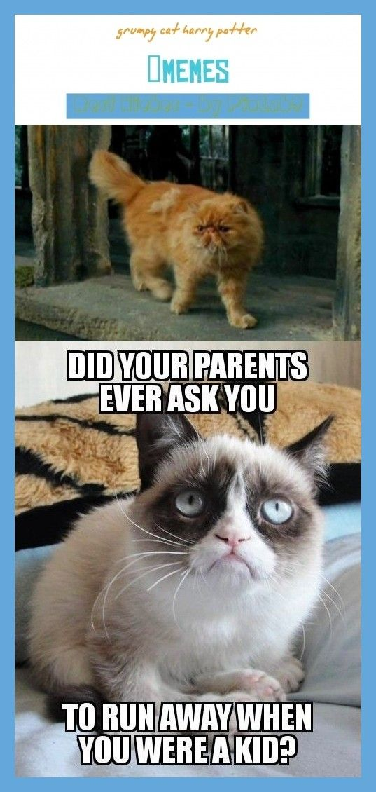 Grumpy Cat Harry Potter Grumpy Harry Potter Murrische Katze Harry Potter Grincheux Murrische Katze Ha Grumpy Cat Humor Grumpy Cat Art Grumpy Cat Disney