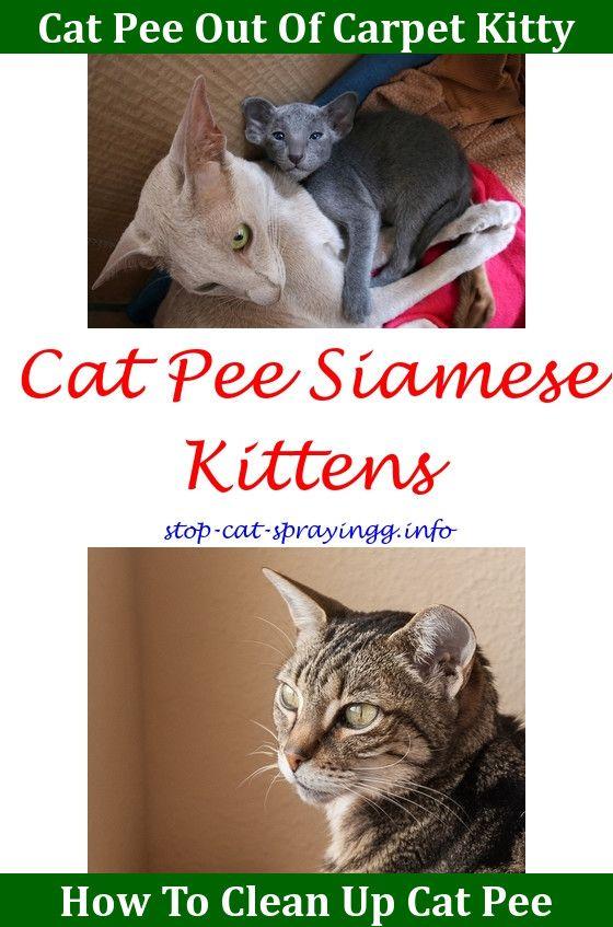 Cat Spray Smell Products Cat Spray Cat Pee Cat Urine