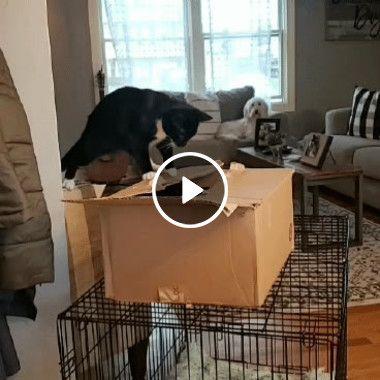O gato curioso viu será que ele perdeu alguma coisa ali!