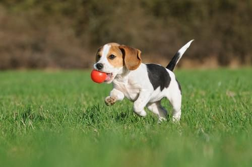 Which Dog Breeds Are The Most Stubborn? See Our List of The Top 10