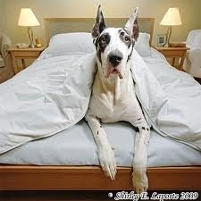 great dane! And then one of these so we can have a really little one and the biggest one.. Haha