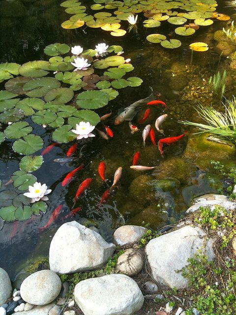 Pinterest the world s catalog of ideas for Best plants for outdoor fish ponds