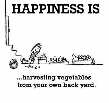 Backyard harvesting.