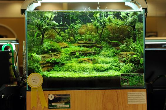 The rockscape in this tank gives you good height and depth for Used fish tank