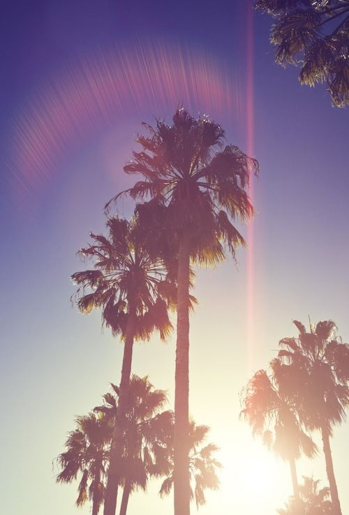 stussy wallpaper palm trees - photo #5