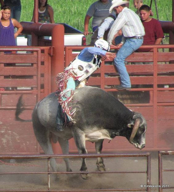 Bull Riding Bing Images Bull Riding Rodeo Cowboy