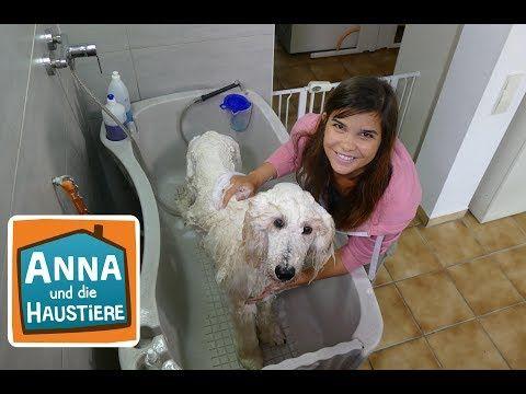 Ein Tag Beim Hundefriseur Information Fur Kinder Anna Und Die
