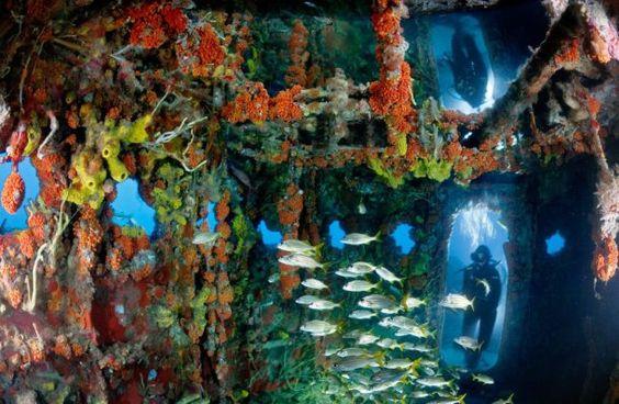 Usan viejos vagones de tren para crear nuevos arrecifes artificiales