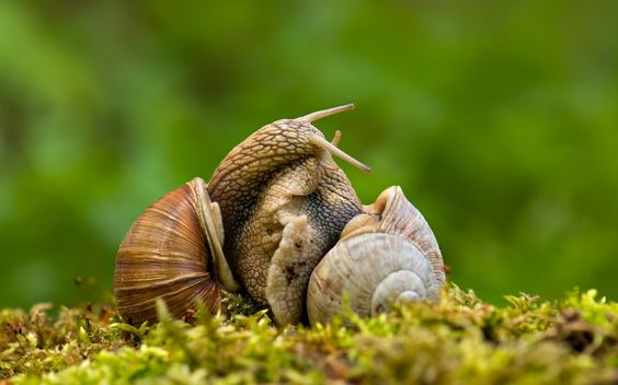 Snails Two Animals