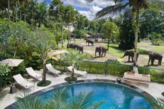 we can fly to bali for 550. Elephant-Safari-Park-Hotel-Lodge-Bali-e1346969837262.jpg (600×398)