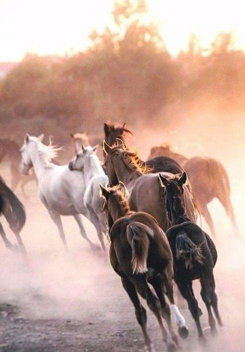 S H A R R A T U M Pferde Hintergrundbilder Pferdeliebe