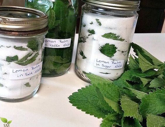 How To Use Lemon Balm (for body, home, and food) www.scratchmommy.com I've been drinking some Lemon Balm Tea in the evening to help wind down - so far, so good!