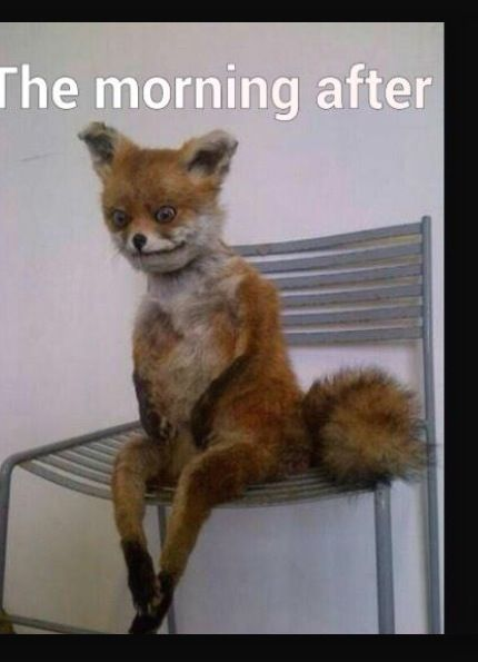 Funny Memes For Hangovers : Memes funny and the o jays on pinterest