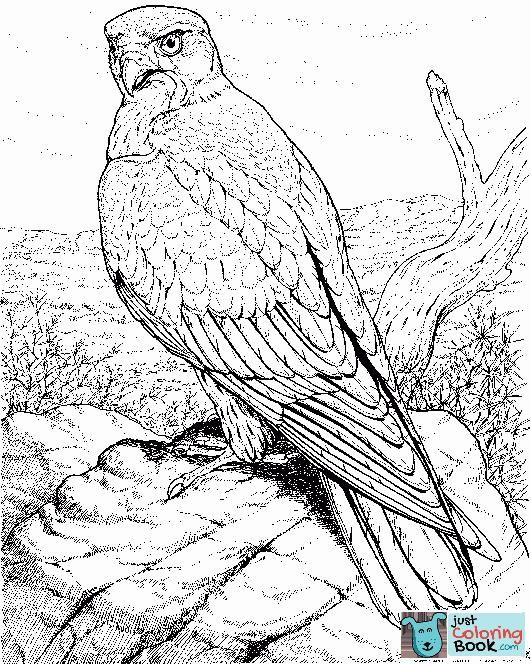 Hawk Bird Coloring Pages Printable Free Download Bird Coloring