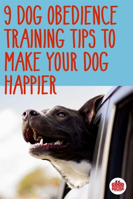 Dog Training Air Horn Dog Training University Dog Training