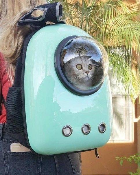 Kotiki おしゃれまとめの人気アイデア Pinterest Cielo Silvestre Callisaya ペット 旅行 猫の家具 ペット