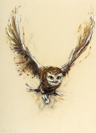 Little Owl Taking Flight-Claire Norrington-Charcoal and Pastel