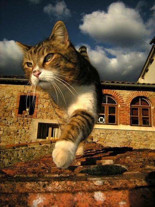 ヨーロッパの街の猫