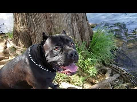 Off Leash Training Puppy Part 1 Youtube Leash Training
