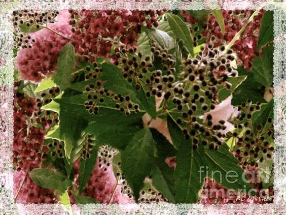 """""""Penny Postcard Christmas"""" ~ © 2010 RC deWinter ~ All Rights Reserved The perfect greeting card for all your holiday correspondence."""