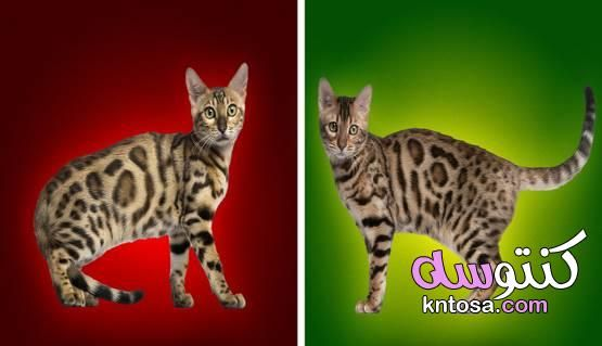 الكلب والقطة لغة جسد الحيوانات الأليفة تكشف عن مشاعرهم 2020 Cats Animals