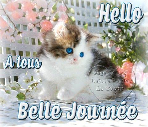 Hello à tous, Belle Journée #bonnejournee chat chaton fleurs mignon: