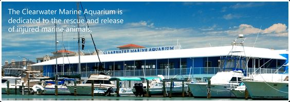 Florida Public Aquarium : Clearwater florida, Florida and The public on Pinterest