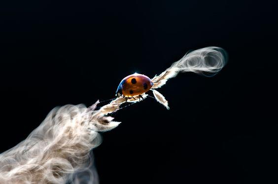 Ladybird 109.