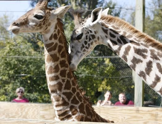 Houston Zoo Will Let Families On Food Stamps Enter For Free Houston Zoo Food Stamps Zoo